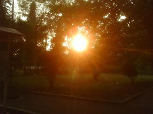 sunset dibalik dedaunan
