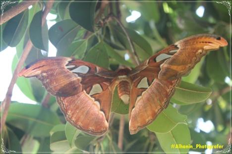 Kupu-Kupu Bawa Ia Terbang Menyentuh Awan Dan Melihat Keajaiban Alam